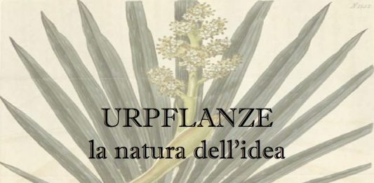 Urpflanze. La natura dell'idea