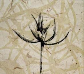 Diana Berto – Osservando la natura