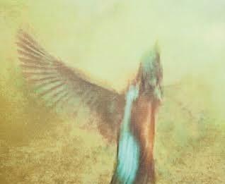 Alessandro Tofanelli – Nel volo del colore. Il re pescatore