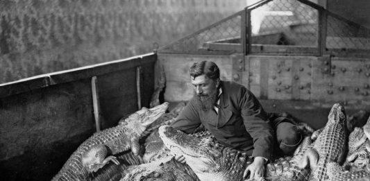 Animalinari-Dialogo im-possibile attraverso le fotografie storiche dell'Archivio Alinari