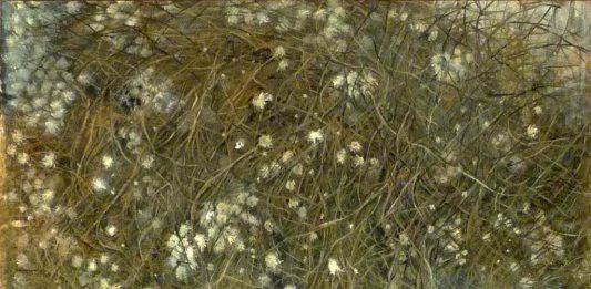 Greta Penacca – Giardini spontanei