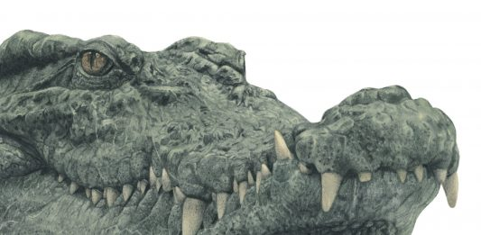Marco Filicio Marinangeli – Storie bizzarre di Coccodrilli e Paccassassi