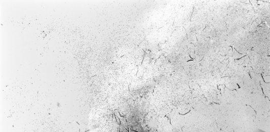 Marco Williams Fagioli – Abstract