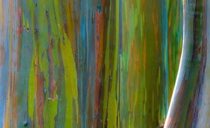 Barbara Dall'Angelo – Sinfonia della Natura