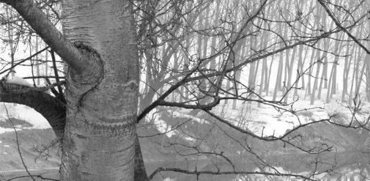 Vittore Fossati – Il Tanaro a Masio