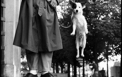 Elliott Erwitt – I cani sono come gli umani, solo con più capelli