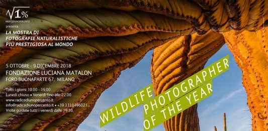 Wildlife Photographer of The Year 53