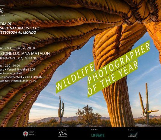 Wildlife Photographer of The Year 53