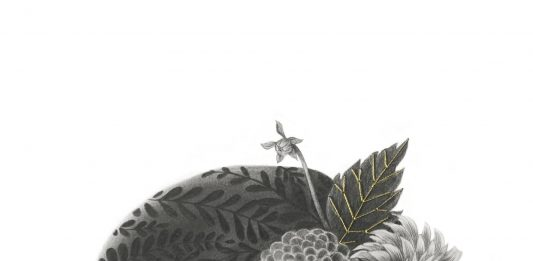 Sefora Pons – Innesti di assenze e botanica