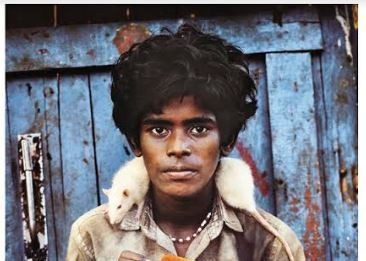 Steve McCurry – Animals