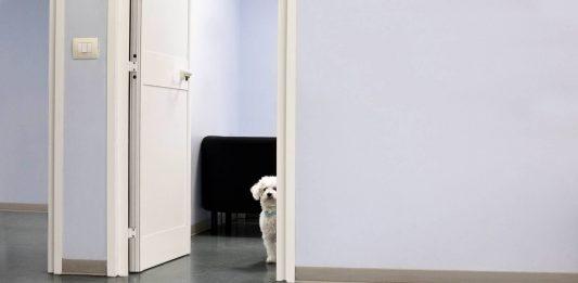 Luigi Avantaggiato – Animalìe