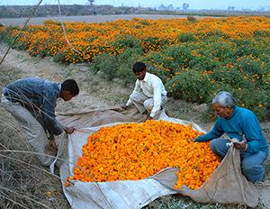 Ravi Agarwal – Ecologies of Loss