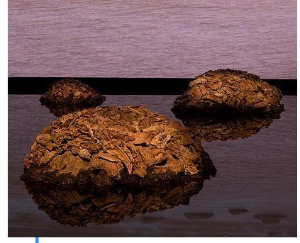 James Darling / Lesley Forwood  – Living Rocks: A Fragment of the Universe