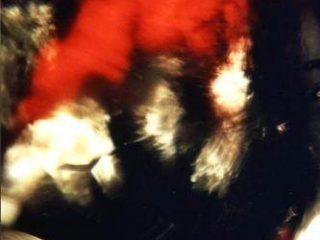 Sinestesia del Flamenco© - Foto analogica, stampata Lambda su carta metal.