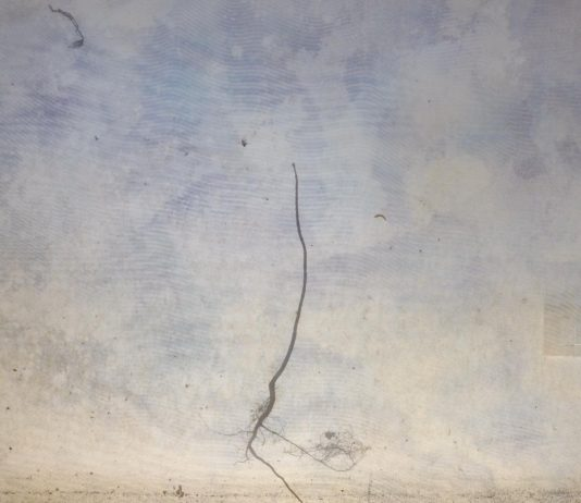 Roberto Ghezzi – Naturografie: un dialogo tra Arte, Natura e Uomo