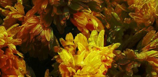 Yellow flower forever