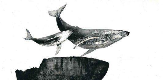 Giorgio Maria Griffa – Cetacea 2. L'incantatore di balene