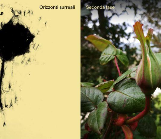 La rosa: orizzonti surreali